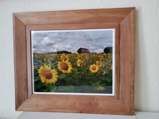 Sunflower Field Farm by Amy Lucid