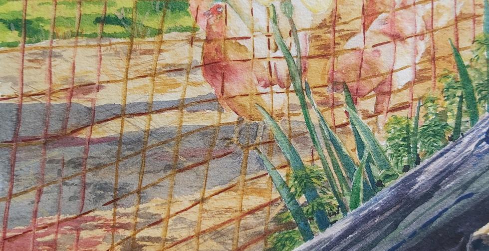 Linda Tyler, Starlight Chickens