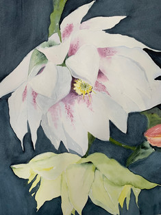 Peony Bloom by Mansoureh Sameni
