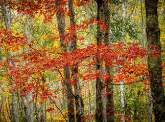 Acadia Fall by Michael Jack