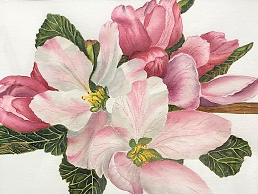 Joanne Roeder, Apple Blossoms