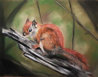 Little Red by Leslie Ober