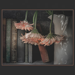 Asleep in the Library by Lisa Jamison