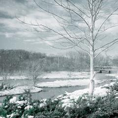 Snow Creek by Carolyn Wiley