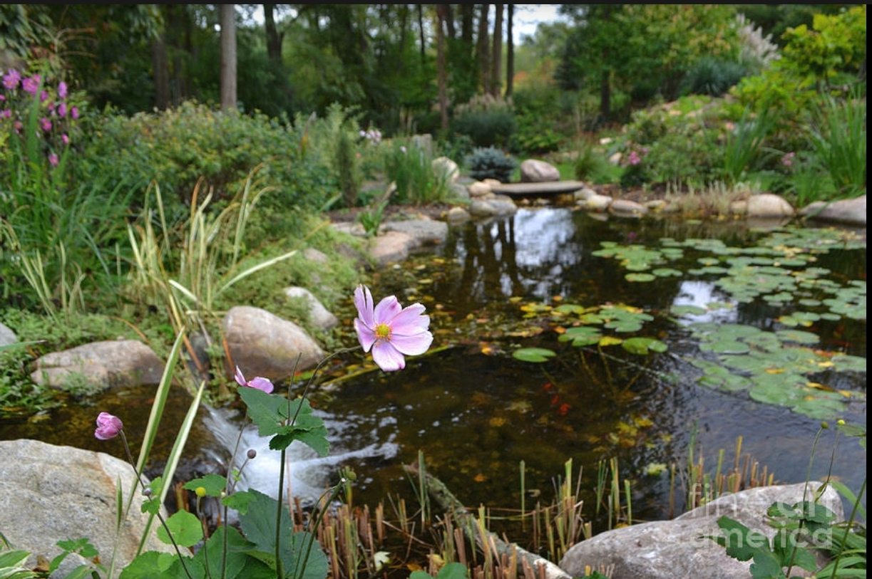 Flower and Koi Pond