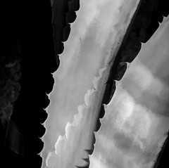 Agave leaves by Kim Holmes
