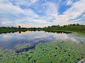 Amy Lucid, West Park Pond Reflections.jp