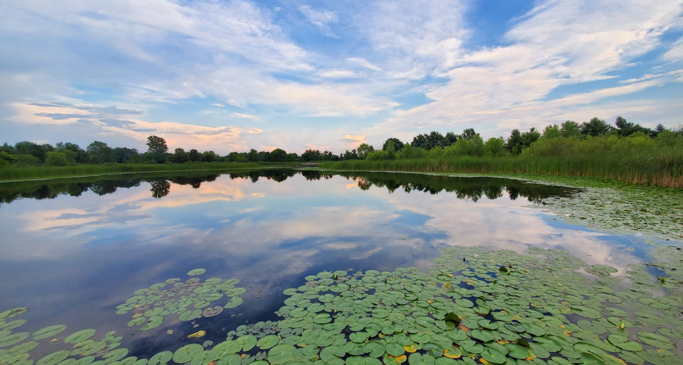 Amy Lucid, West Park Pond Reflections