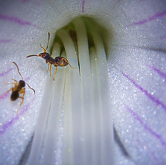 It's the Ants by Carolyn Wiley