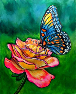 Butterfly on a Rose