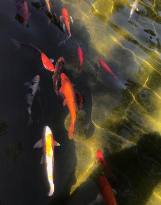 Upstream by Melinda Hamilton