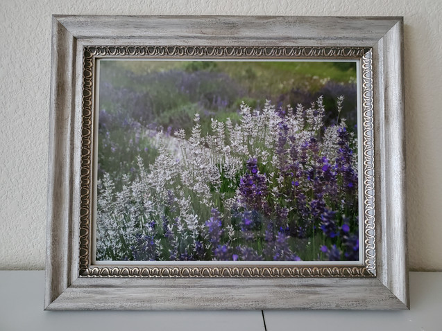 Lavender in Blue and White by Amy Lucid