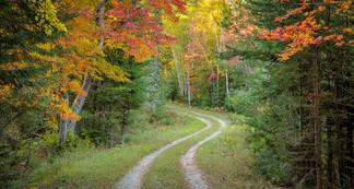 Lane In Fall by Michael Jack