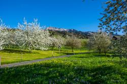 Rigi, Frühling