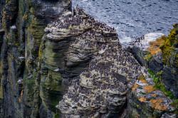 Lummen Cliffs of Mohair