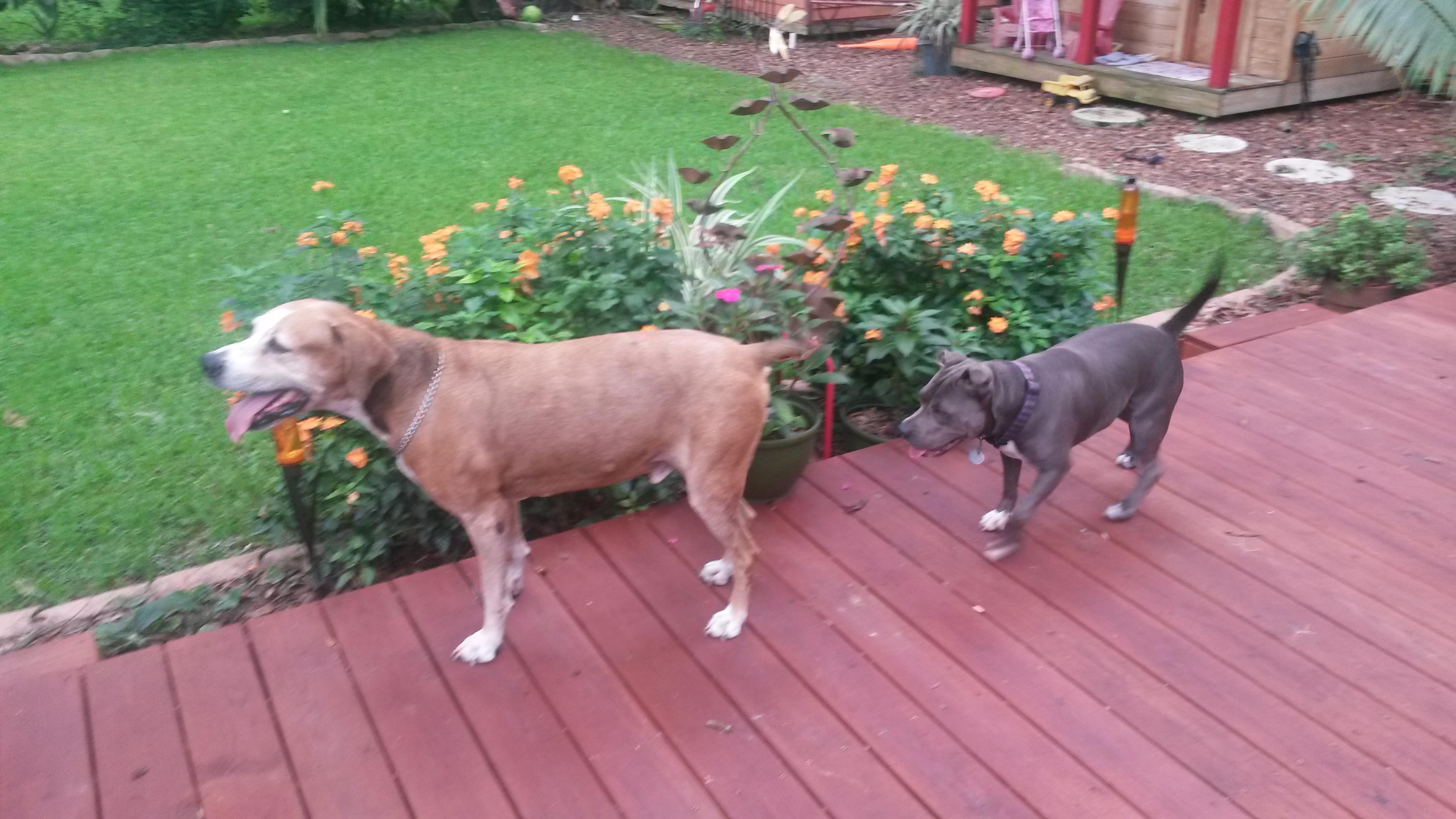Bruno & Shorty