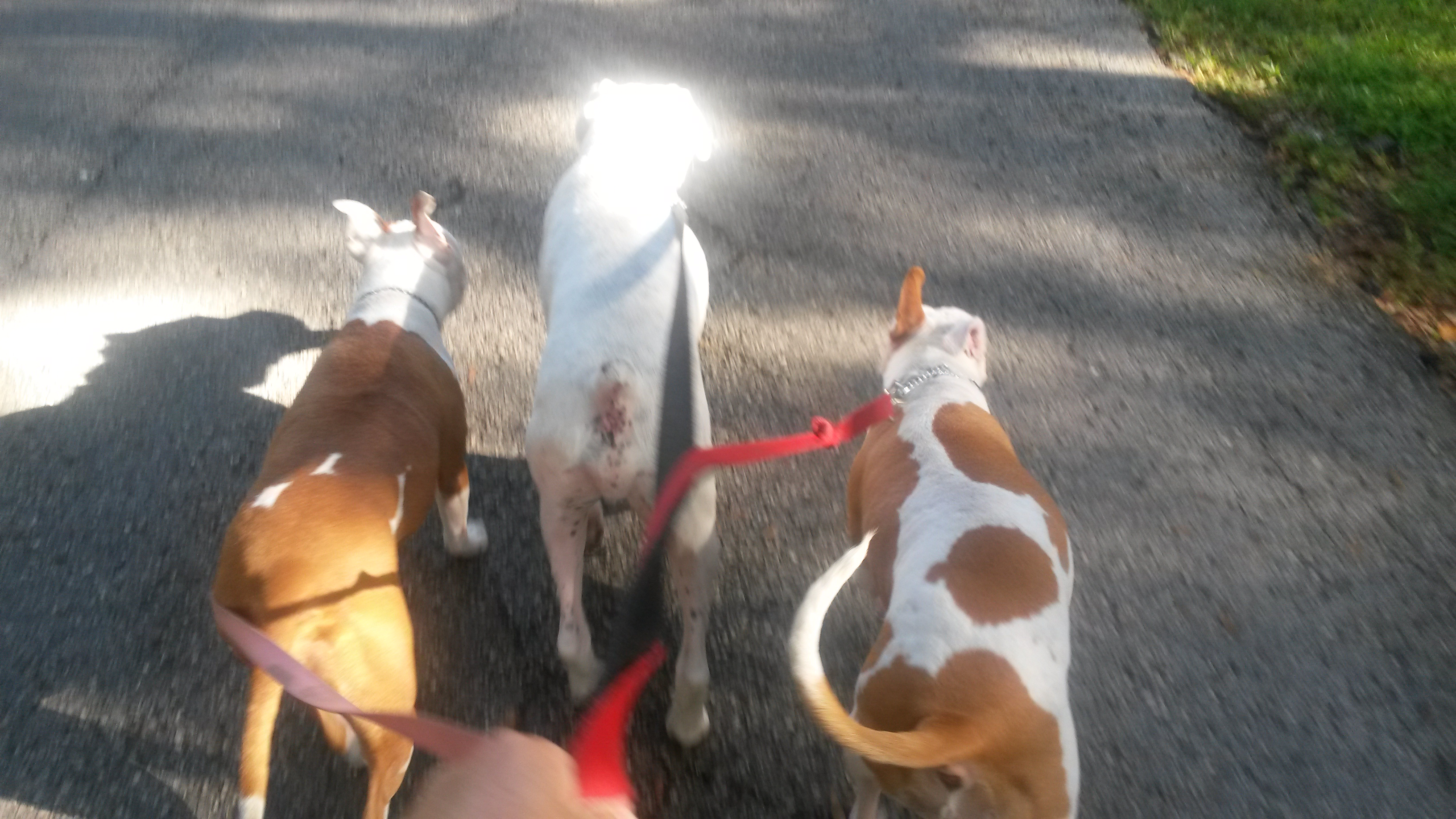 Better than Doggie Daycare