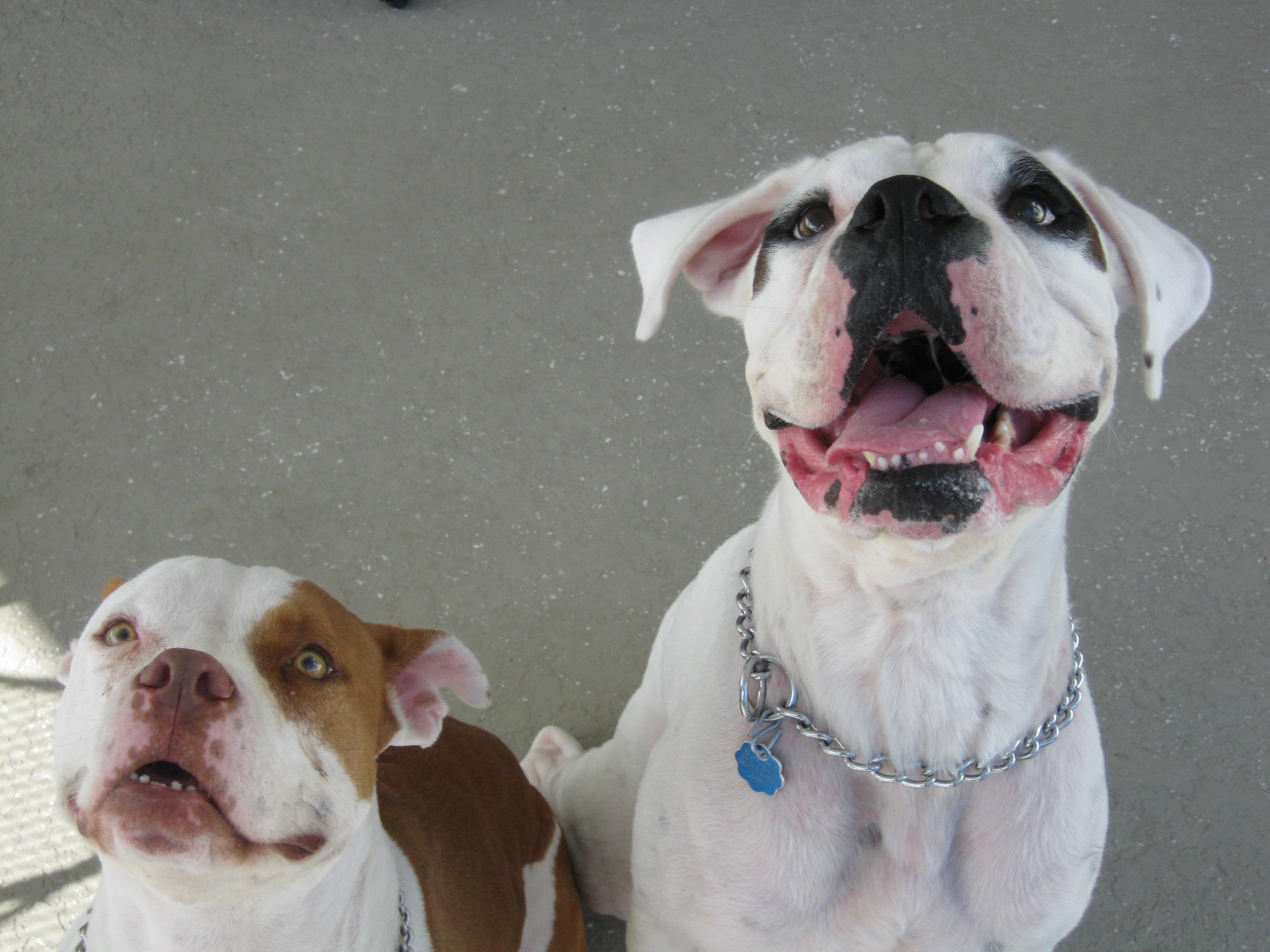 Apollo & Xena Best Buds!