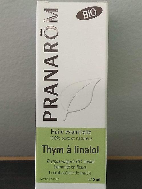 Thym à linalol
