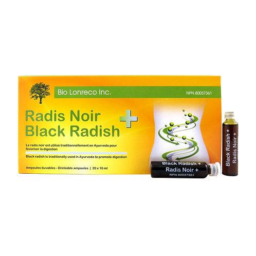 Radis Noir +