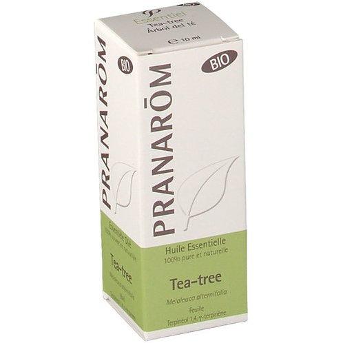 Tea-tree (Melaleuque à feuilles alternées) - Melaleuca alternifolia