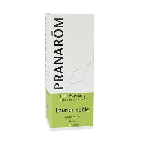Laurier noble - Laurus nobilis