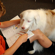 Deaf therapy dog