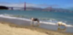 dog trainer; dog behavior; positive trainer