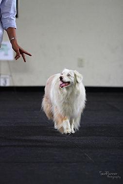 deaf dog competition