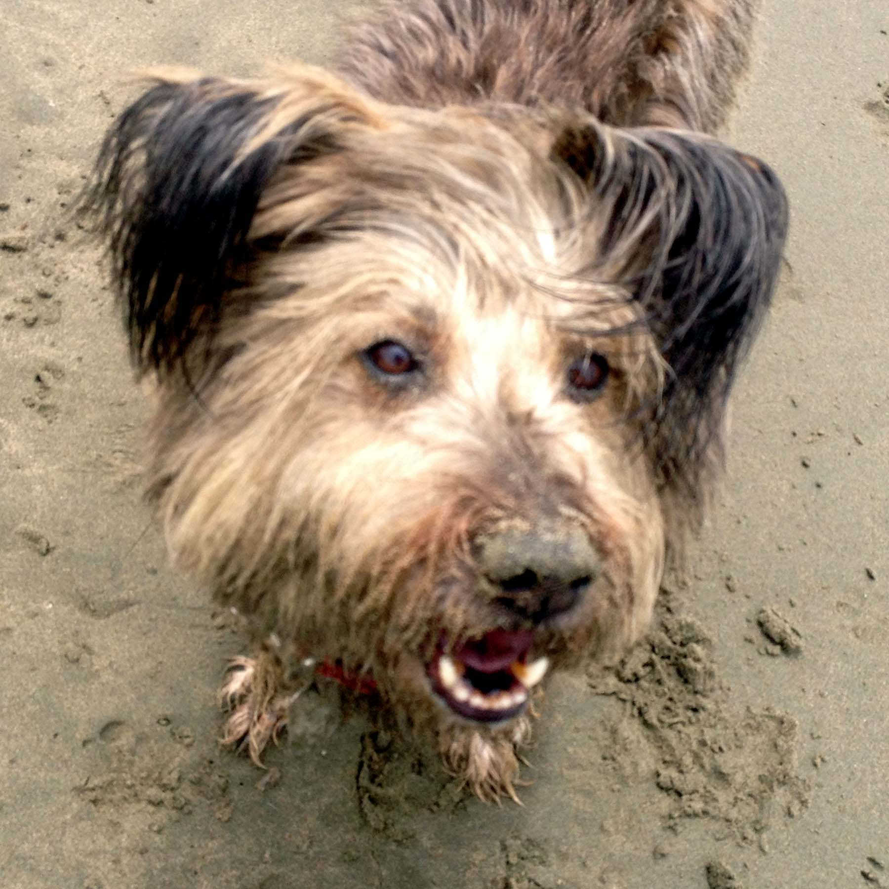 Eddie is all sandy & wet