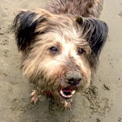 Eddie is all sandy & wet