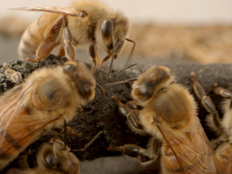 Q&A with Healthy Bees