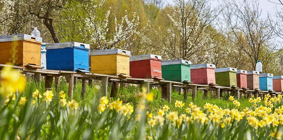 bee hives lined up.jpg