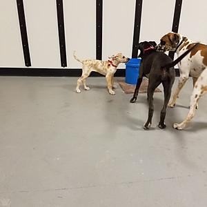 Large Dog Meet & Greet