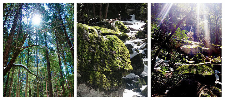 Rise and Shine -  Yosemite National Park - Photography Print