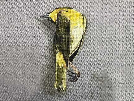 Bird at Peace | Canvas Shading