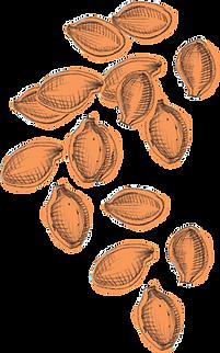 Hi Five_Uplaod_Illustration_Pumpkin Seed
