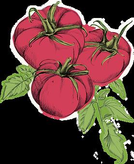 Hi Five_Uplaod_Illustration_Tomato.png