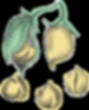 Hi Five_Uplaod_Illustration_Chickpeas.pn