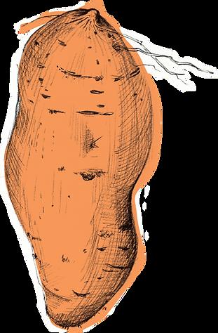 Hi Five_Uplaod_Illustration_Sweet Potato