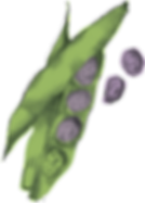 Hi Five_Uplaod_Illustration_Pea Pod Purp