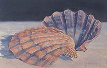 Lion's Paw Seashell