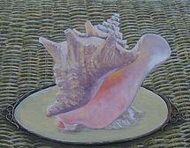 jeanneweaverartist,Seashell paintings and drawings