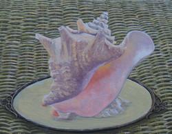 Key West Conch