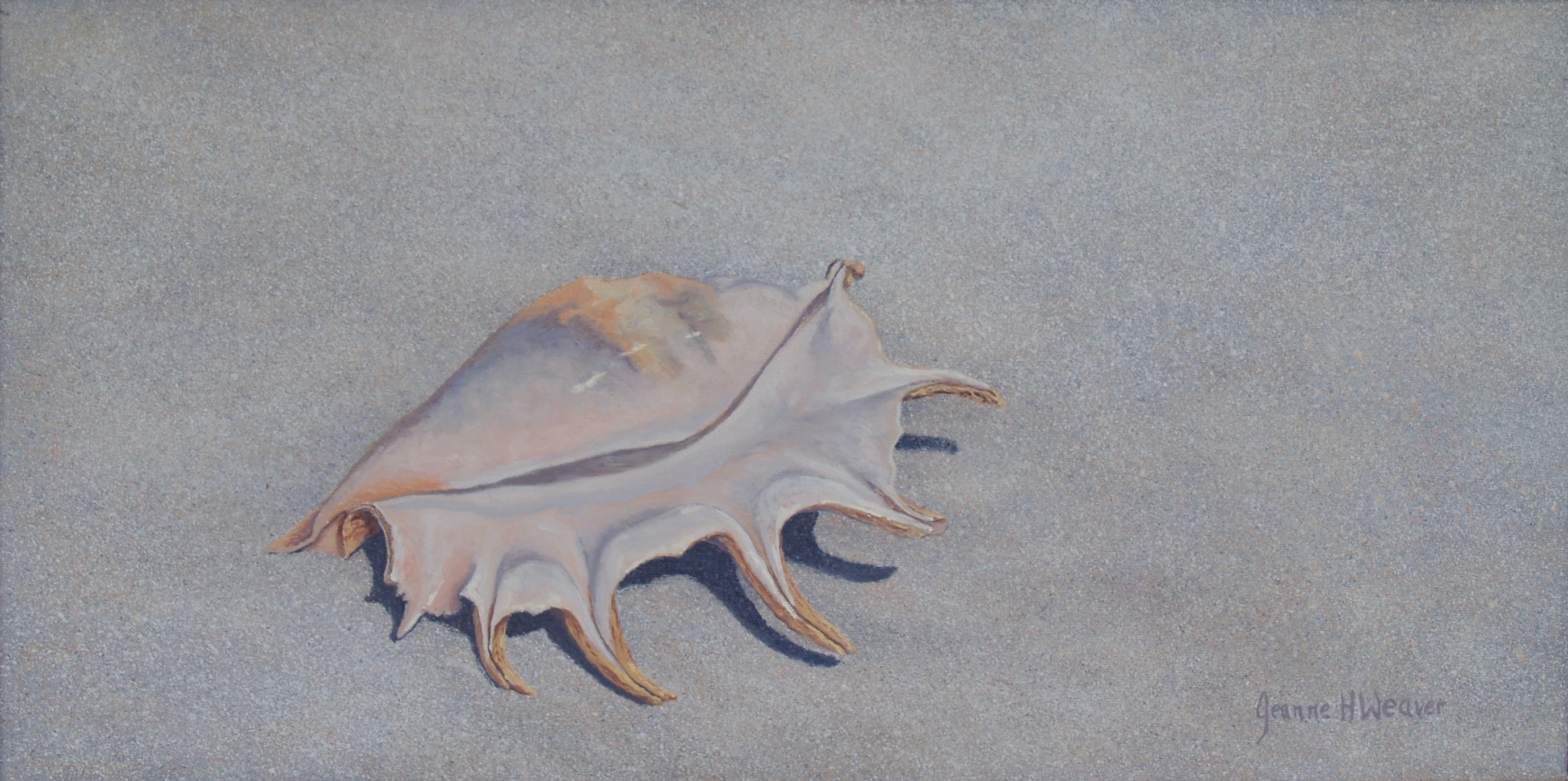 SpiderConch.11x22.oil.2014.WEB
