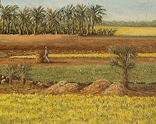 Mustard Field Bangladesh