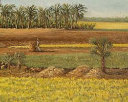 Mustard Fields on the way to Rajshai