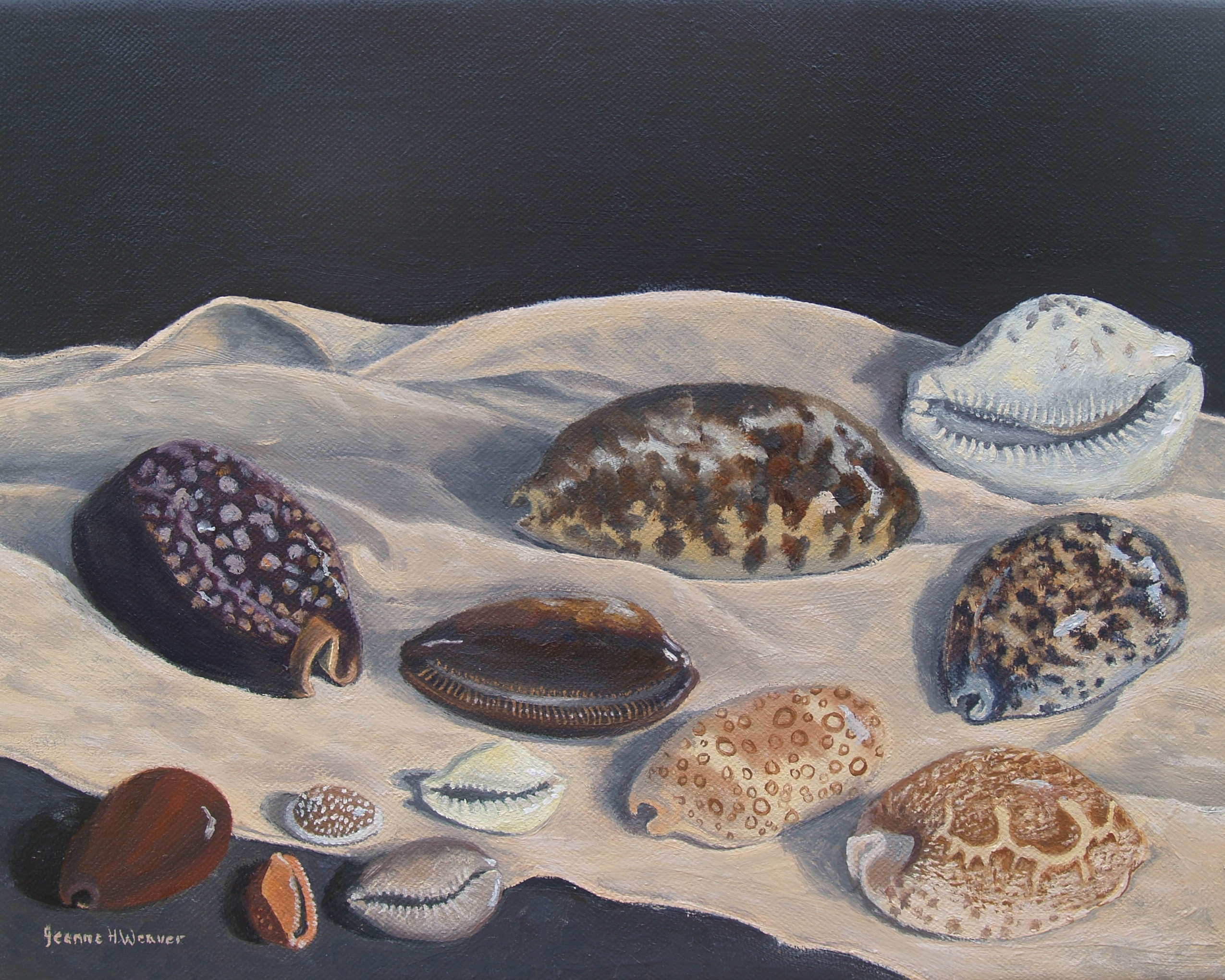 Cowries on a Silk Scarf