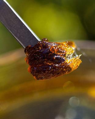 cannabis extraction.jpg