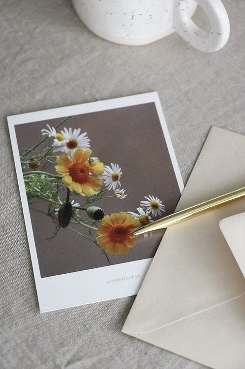 Postcards - Compositae wildflowers (set of 6)